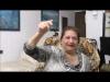 Embedded thumbnail for Sukkot